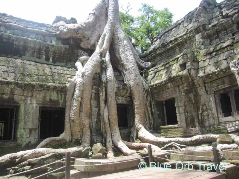 Tree Growing from Ta Prohm Temple Ruins at Angkor Wat, Cambodia