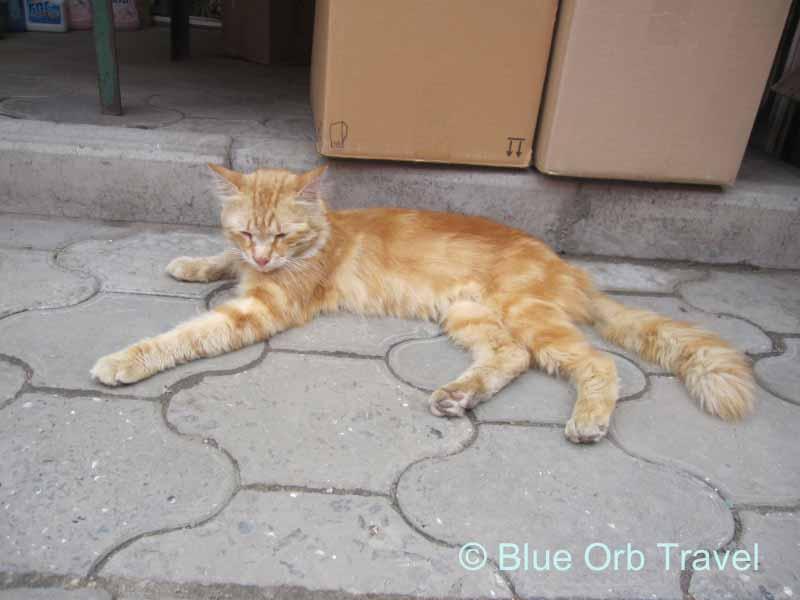 Sidewalk Kitty in Rostov on Don, Russia