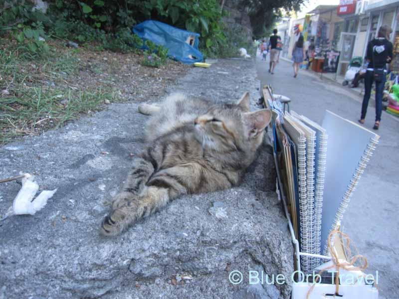 Cat on a Ledge in Yalta, Ukraine