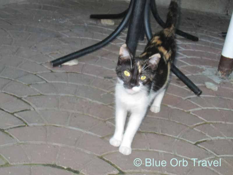Cat in Yalta, Ukraine