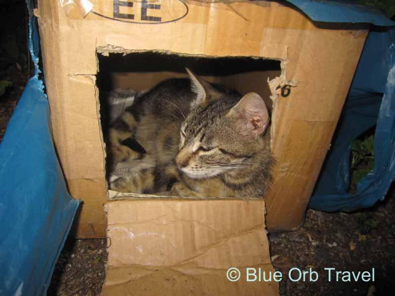Cat in the Box, Yalta, Ukraine